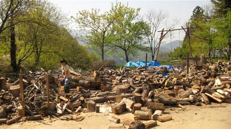 庭に集められた薪の山